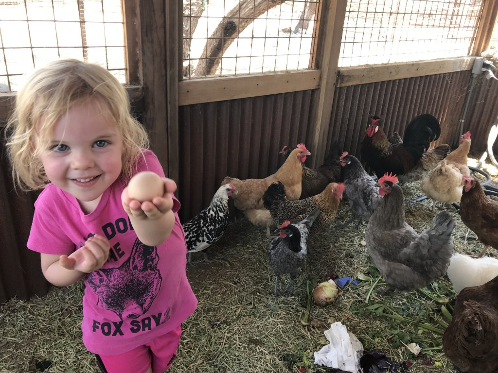 Finding farm fresh eggs in Tucson, AZ