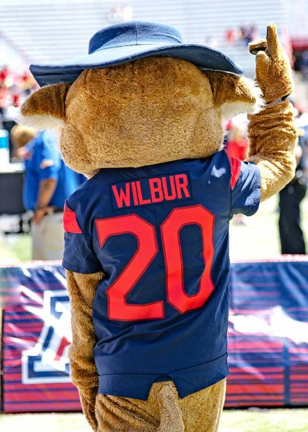 The University of Arizona mascot Wilbur is facing away wearing his number 20 red and blue football jersey waving.